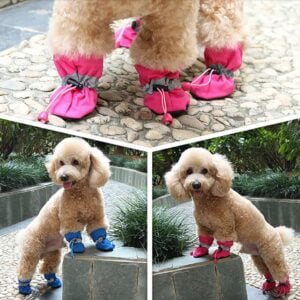 dog shoes small